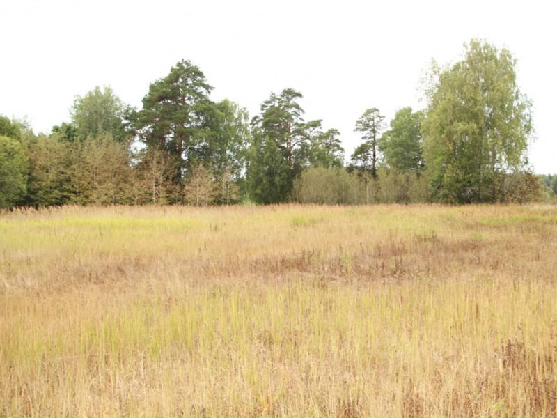 Лагерная поляна