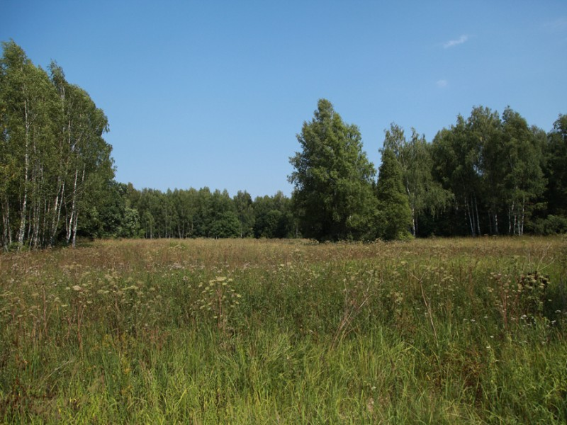 Луг деревни Родники