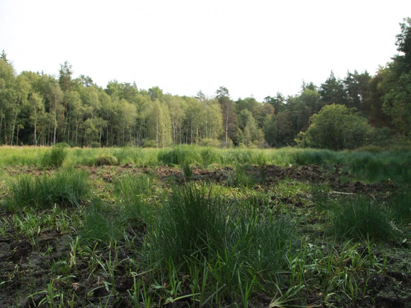 Сионское болото