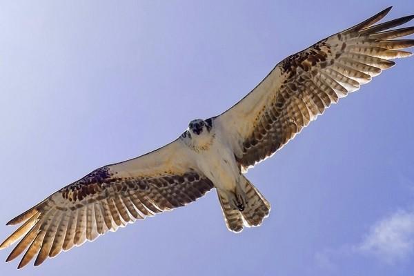 ptica-polet-krylya-nebo