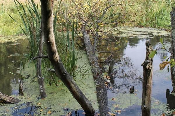Миниатюра. плотина на Таденке