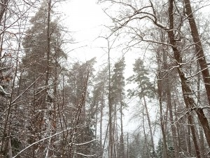 zimnijlespedenko-1